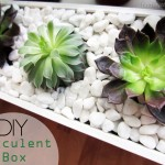 DIY Succulent Box
