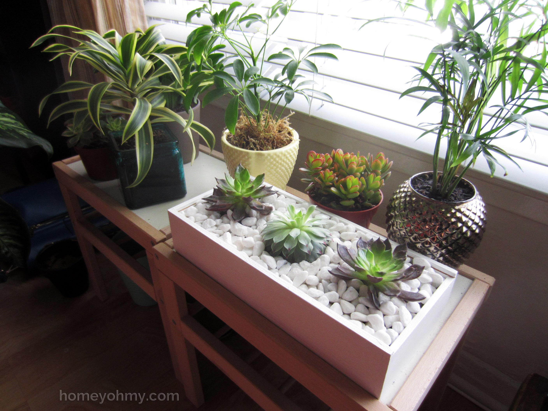 Diy succulent box for Indoor gardening apartment