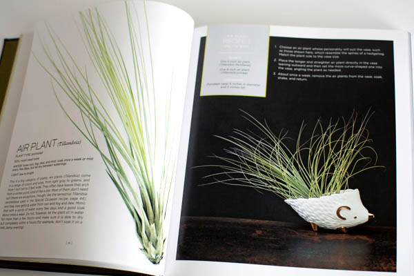 Tillandsia Recipe