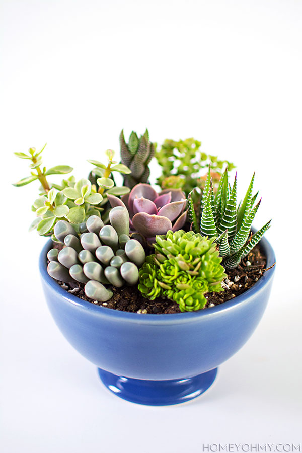 Ordinaire DIY Mini Succulent Garden
